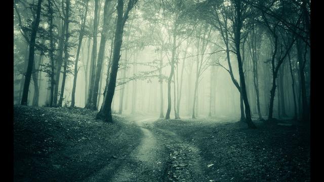 Tree Fiction BAC